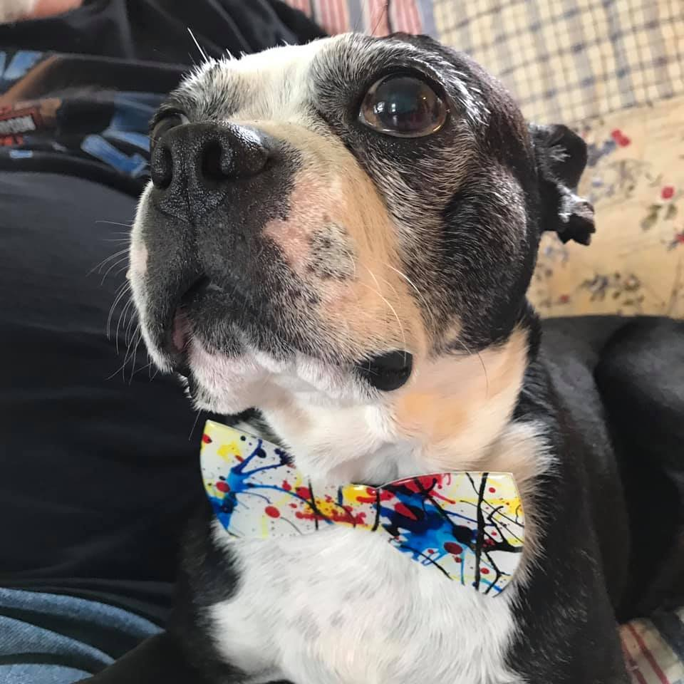 Pet Lovers-Bow Tie